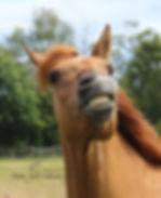 Artgerechte Fütterung Pferd