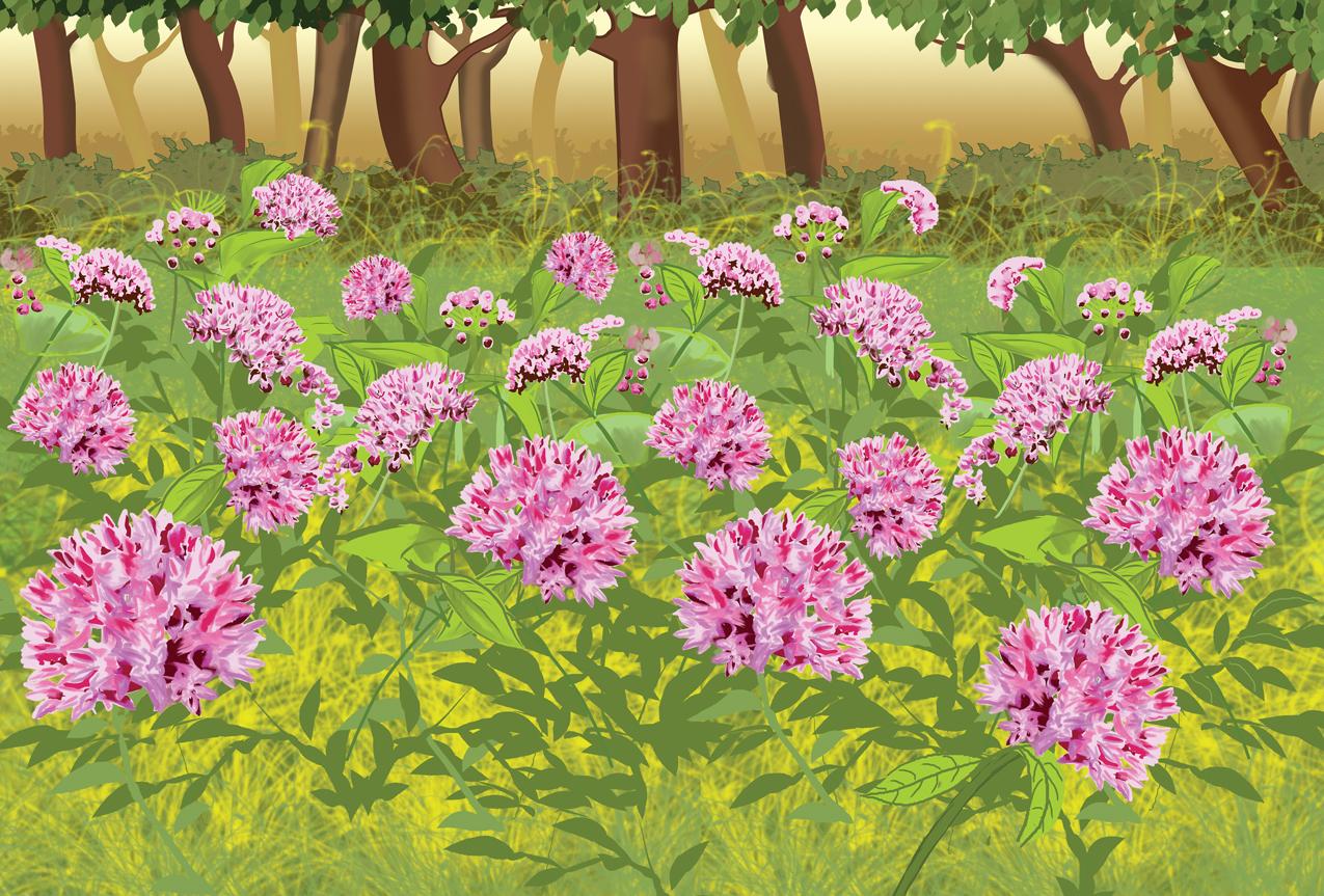 P1-FlowersSpread
