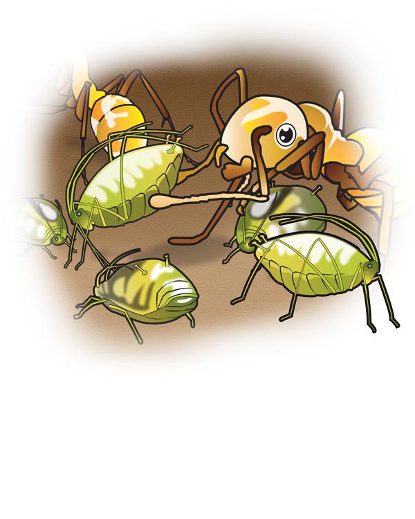 Ants-P12