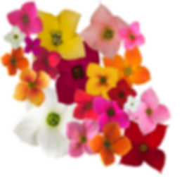 Single Blooms Graphic (1).png