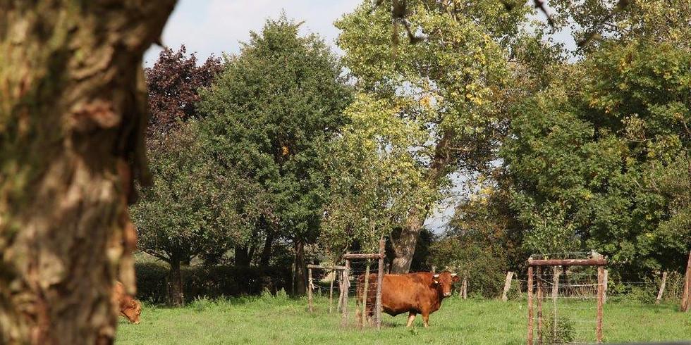 Alles Bullerbü? Moderne Landwirtschaft heute