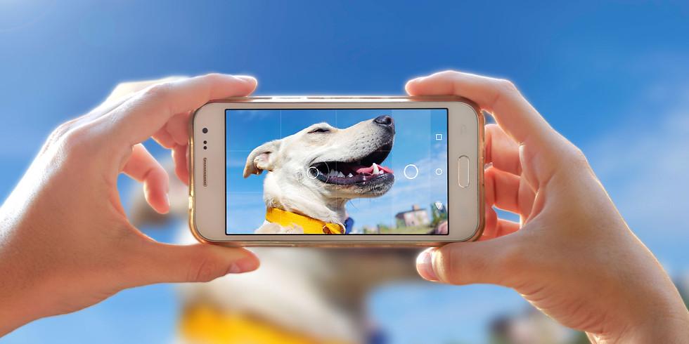 Phoneografie - Fotografieren mit dem Smartphone