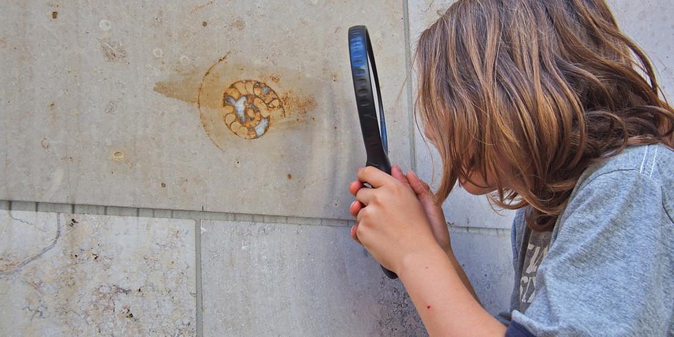 Steine in der Stadt: Geologische Exkursion in der Kölner City
