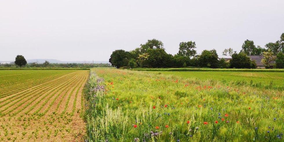 Artenvielfalt in der Landwirtschaft