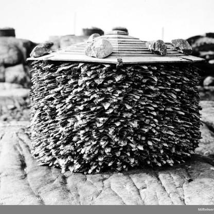 Tørket torsk til lagring