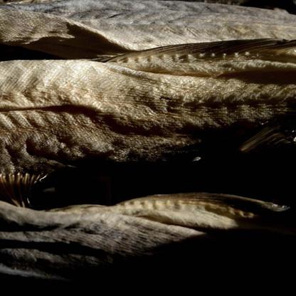 torrfisk-tore-berntsen