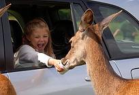 Join us on a fantastic safari adventure at the beautiful Longleat Safari Park