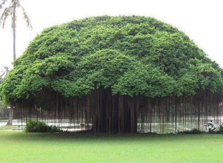 ענת קוריאל| עץ החיים