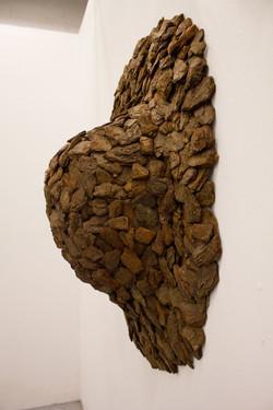 Pinus fragiforme I