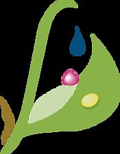 final logo2_no background.png