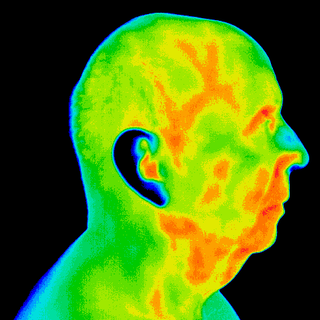 1 male model Left Lateral head.png