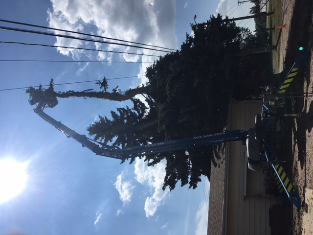 removing trees around electric lines