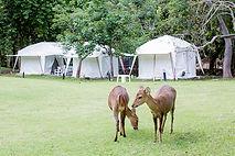 свадьба в Заповедной долине