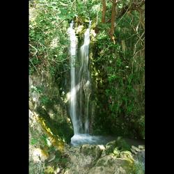 Cascade Origan