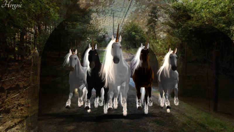 Courses de Licornes