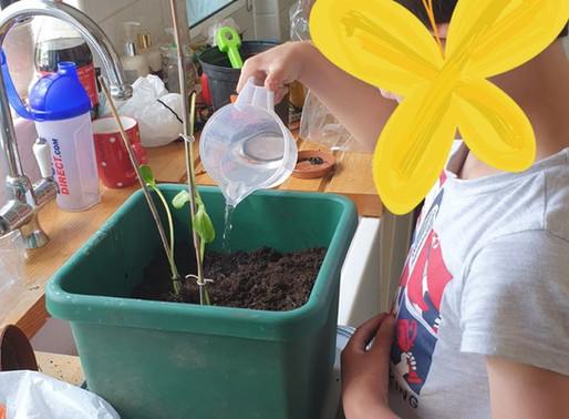 This Year 4 pupil is loving planting up his sunflower.  He is learning all about plants in Science.