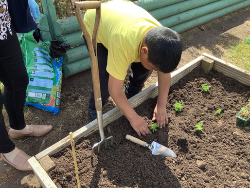 Year 2 have been busy planting up their garden in preparation for our Garden Festival