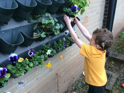 Year 1 Dolphins planted their pansies and added them to our beautiful living wall.