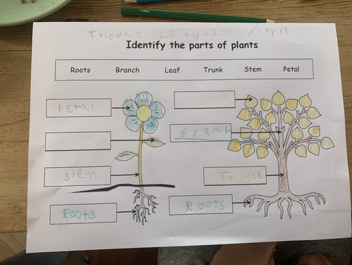 The children in Puffin class are learning about the 'Parts of a Plant' here is some lovely work...