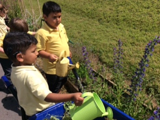 Year 1 ( Birch Class) have been busy watering today...