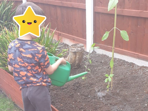 This Y4 pupil has grown the most amazing sunflower!