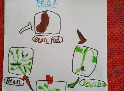 In Science Puffin class have been learning about the parts of a plant. As part of their learning...