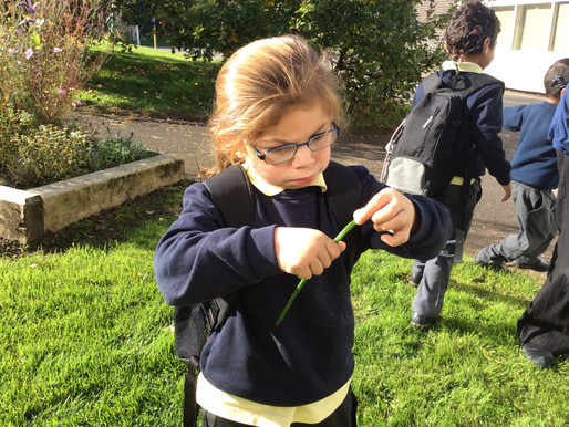 Ash Class (Y1) have been learning about to use their sense of smell during our science lessons