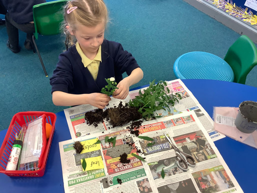 Year 1 (Dolphins) have been learning about the parts of a plant.