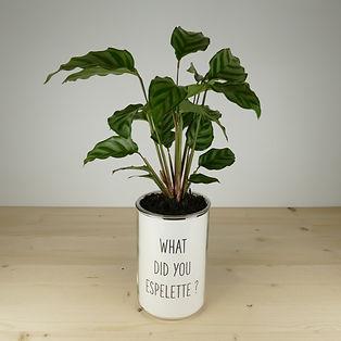 Pot pour plante what did you espelette