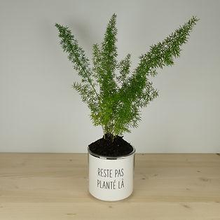 Pot pour plante reste pas planté là