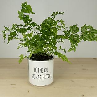 Pot pour plante hêtre ou ne pas hêtre