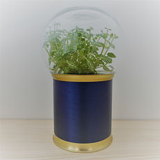 terrarium de plante original, design et pas cher !