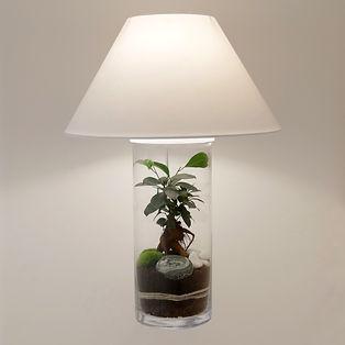 lampe de bureau terrarium plante déco décoration lampeterrariumdéco lampeterrariumdécoration Paris