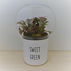 un cadeau végétal personnalisé : un terrarium à message Green Cocoon à 29€