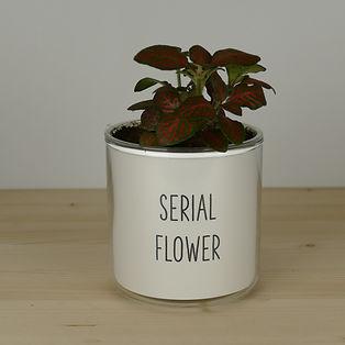 Pot pour plante serial flower