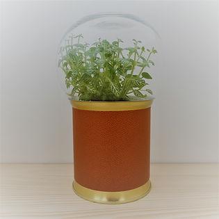 terrarium original et pas cher socle aspect cuir et doré + cloche verre