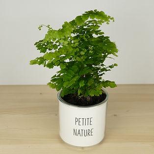 Pot pour plante petite nature