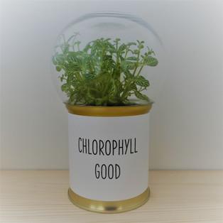 CHLOROPHYLL GOOD