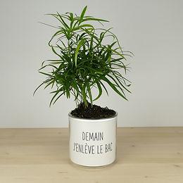 petit pot de plante à réserve d'eau