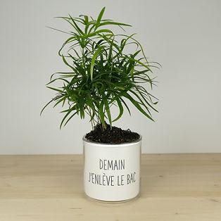 Pot pour plante demain j'enlève le bac