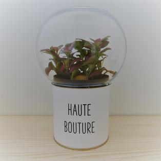 HAUTE BOUTURE