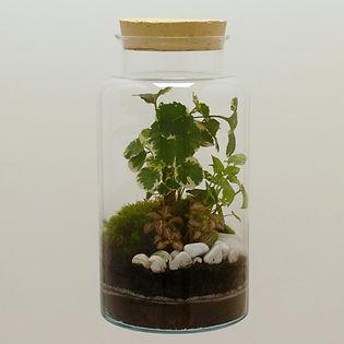 terrarium de plantes avec bouchon liège