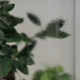 condensation terrariums de plantes