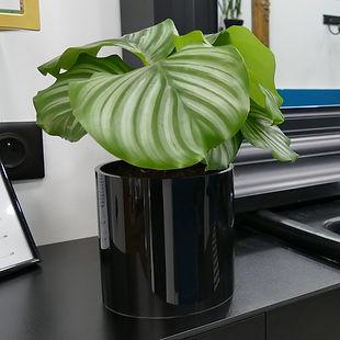 pot de plante haut de gamme aspect verre laqué
