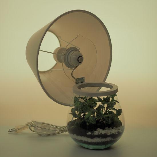lampe terrarium plantes Paris innovation