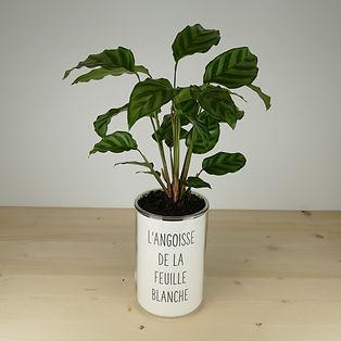 Pot pour plante l'angoisse de la feuille blanche