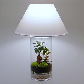 lampe de bureau végétale : une innovation Green Cocoon