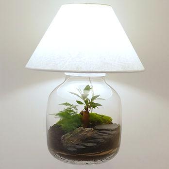 lampe de salon réalisée avec un terrarium de plantes : une invention Green Cocoon