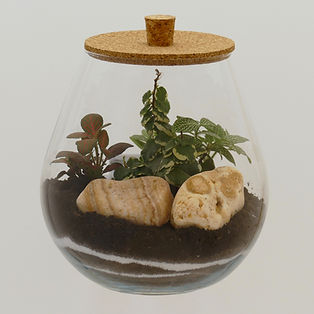 terrarium plantes Paris cadeau original zen