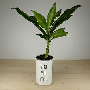 Pot pour plante veni vidi verdi